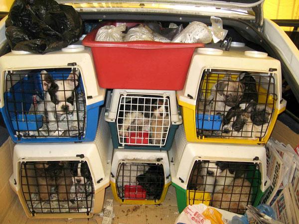 Cani a staffetta: Il commercio dei cani che deve preoccupare