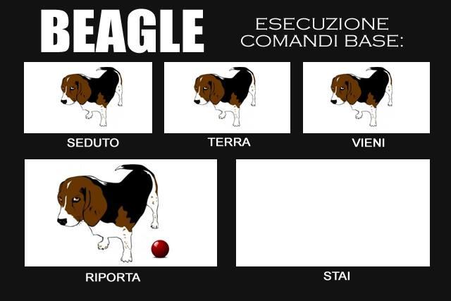 beagleforever