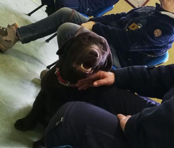 pilliy akela amici dentro carcere tolmezzo pet therapy castellani (2)
