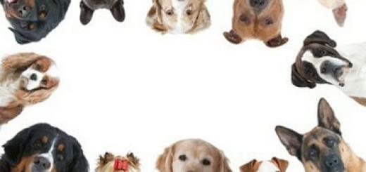 cani-di-razza-predappio