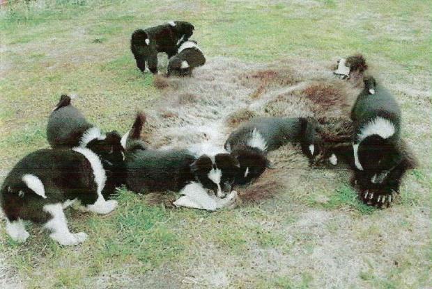 Cuccioli su orso