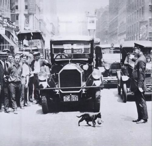 A cat carrying her kitten across the street, stopping NYC traffic - 1925
