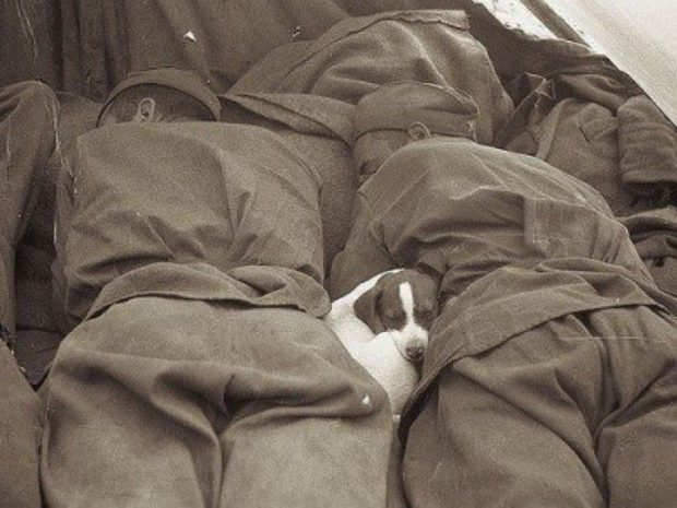 A puppy takes a nap between some Russian soldiers, 1945.