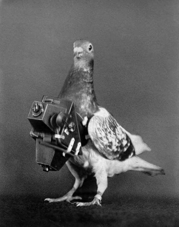 Animal espionage... From 1908 pigeons were fitted with cameras to take aerial photos.
