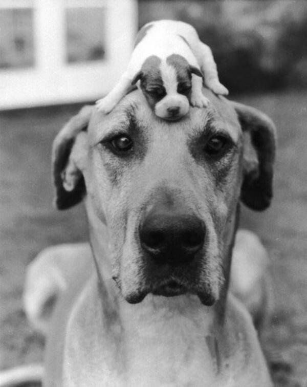 Big dog and a small dog, c. 1950