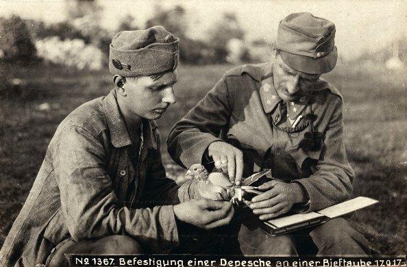 applicazione di un dispaccio ad un colombo viaggiatore, 17 settembre 1917