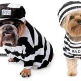 cani-in-prigione