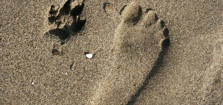 piede-uomo-zampa-cane