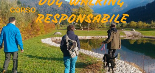 dog walking responsabile