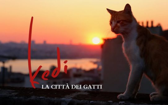 19. CinOforum: Kedi, la città dei gatti