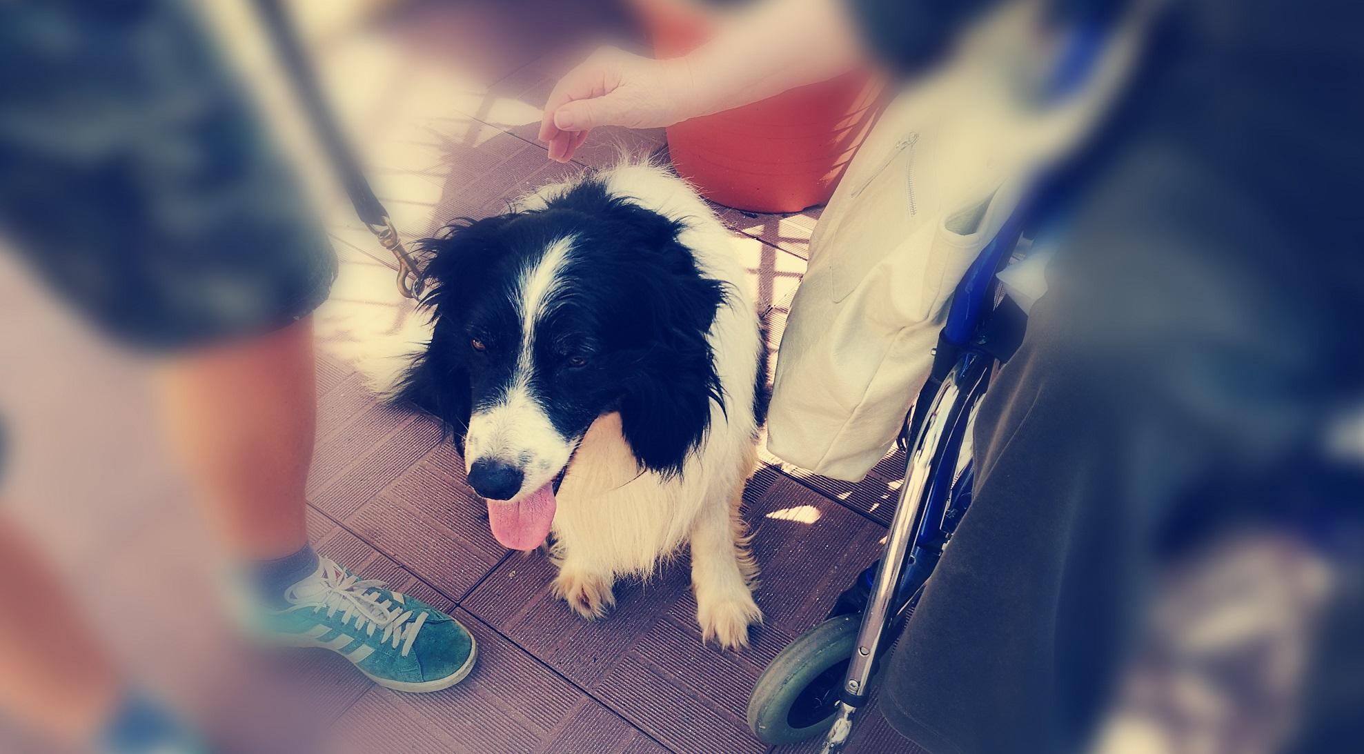 Corso di aggiornamento per conduttore di cani da Pet Therapy