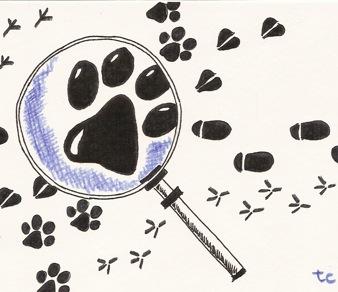 tracce_animali